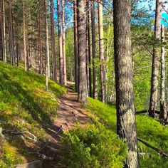 Forest path (Finland) from (@rokuahealthspa) on Instagram