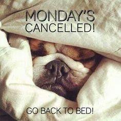 Monday. Bulldog