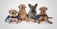 Get your Service Dog Registration and register for free online. Autism Service Dogs, Search And Rescue Dogs, Emotional Support Animal, Dog Icon, Martingale Dog Collar, Dog Id Tags, Therapy Dogs, Working Dogs, Dog Behavior