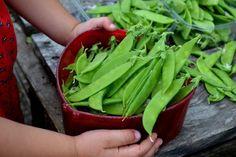 Kjøkkenhage for begynnere - Sara Bäckmo Celery, Diy Design, Vegetables, Land, Tips, Flowers, Gardening, Food, Backyard Farming