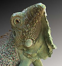 Faducci...hand sculpted concrete, Galapogos Sea Iguana, 10 ' long