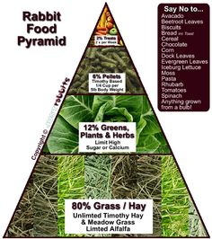 The rabbit diet pyramid - its soooo simples! Have a look at the safe food list…