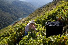 The Cruceiro winery has won awards from both Spain and Italy since 1990 to recognise the quality of the wine it produces and its new wine was given a distinction in 2011 #winelover