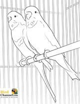 Grab Your Crayons Markers And Colored Pencils Print Out These Pet Bird Parrot Finch Canary Coloring Pages Fill Life With Color