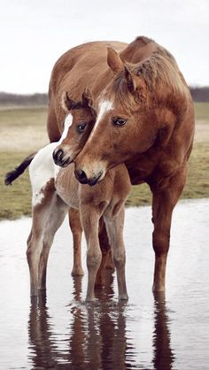 Mother's Love by Wiebke Haas on Baby Horses, Cute Horses, Pretty Horses, Horse Love, Wild Horses, Beautiful Horses, Animals Beautiful, Beautiful Beautiful, Horse Photos