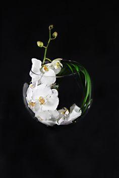 Fashioned inside our elegant ice vase, a circle of beautiful Cymbidium orchids