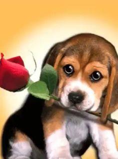 - 1 photo by - Bewegliche Bilder gifts - Beautiful Love Pictures, Beautiful Gif, Cute Pictures, Beautiful Roses, Animals And Pets, Baby Animals, Cute Animals, Animation, Dog Love