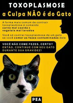 Blogateira: PAPO DE GATEIRA: Toxoplasmose, a Culpa Não é do Ga.