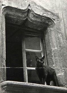 Gatos de la ciudad, 1938 por Brassaï