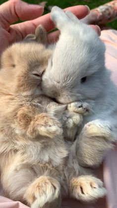 Baby bunnies make life better! Baby bunnies make life better! Baby bunnies make life better! Cute Little Animals, Cute Funny Animals, Cute Cats, Adorable Baby Animals, Cute Animal Videos, Cute Animal Pictures, Cute Baby Bunnies, Cute Babies, Fluffy Animals
