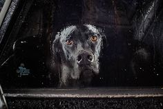 The Silence Of Dogs In Cars By Martin Usborne | http://www.yatzer.com/the-silence-of-dogs-in-cars-martin-usborne