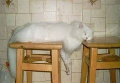Funny images of cats (Top 10)