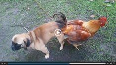 Try Not To Laugh Compilation- Best Funny dogs videos- PlayUtube Funny Pet Animals Videos. Here is the best, funniest, cutest and most ridiculous animal / pet video clips collection. From funny cat fails, to monkeys, peng Funny Animal Fails, Funny Cat Fails, Funny Cat Memes, Funny Dogs, Funny Animals, Funniest Animals, Animals Dog, Vines Funny Videos, Funny Vines
