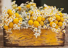 billy balls and daisies. i love billy balls! Love Flowers, Yellow Flowers, Spring Flowers, Beautiful Flowers, Wedding Flowers, Wedding Colors, Daisy Flowers, Wedding Ideas, Simple Flowers