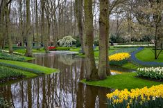 Challenge yourself with this Spring Display jigsaw puzzle for free. 101 others took a break from the world and solved it. Amsterdam, Jigsaw Puzzles, Golf Courses, Display, World, Spring, Plants, Daffodils, Tulips