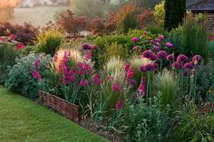 Pettifers . Dawn light hits a border with Allium firmament, Stipa tenuissima and Gladiolus communis byzantinus. Photographed by Clive Nichols.