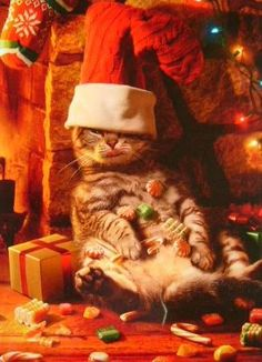 Cat Christmas...he looks thrilled ;-)