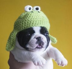 puppy-frog