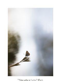 Une Image entre ombre et lumière, pas de hurlement de loup aujourd'hui, ni de soirée folle avec des rencontres surprenantes. Juste un petit papillon qui attend la nuit, un papillon qui a gouté aux joies d'un fin d'été, un papillon qui goute au virage d'au