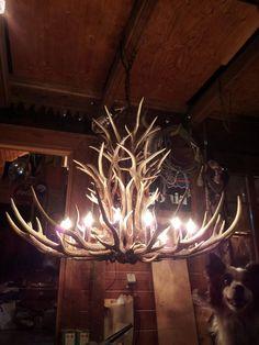 Deer horns chandelier. Imagine this in a gorgeous barn over the dance floor.