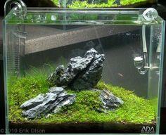 Create an Iwagumi Aquascape Salt And Water, Fresh Water, Aquascaping Plants, Aquarium Landscape, Betta Tank, Nano Tank, Dee Dee, Planted Aquarium, Freshwater Aquarium