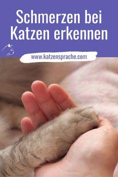Die Ursachen für Schmerzen bei Katzen können sehr vielfältig sein. #katze #katzen #katzenschmerzen #katzenkrankheiten #wohnungskatzen #katzekrank #katzentipps #katzenverhalten #krankekatze #katzehatschmerzen
