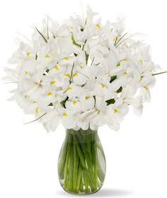 White Iris without Vase