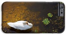 Animal IPhone 6s Case featuring the photograph Swan With Sun Reflection On Water. by Jan Brons. Swan with sun reflection on water.     This has been a real challenge to take this photo of these swans as I had to find a high point to shoot downwards