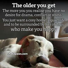 So much truth I Love Dogs, Puppy Love, Cute Dogs, Animal Quotes, Pet Quotes, Dog Rules, Dogs And Puppies, Doggies, Dog Mom