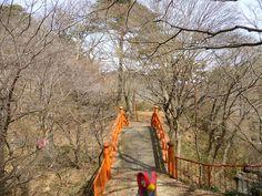 Unfezant in Yamatsuri, Fukushima 48 (Yamatsuriyama Park)