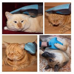 Cat Hair Remover Glove
