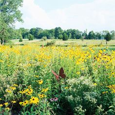 """Cultivate a Meadow """"A wildflower meadow is virtually maintenance-free once established. For success, invest some time in planning and preparation."""" See BH for more info on how to cultivate a meadow."""