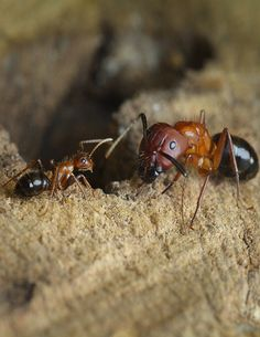 A study published this week found that treating ants with chemicals can alter…