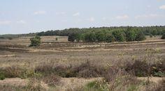 Op safari in eigen land - Bekijk meer foto's op www.reiskrantreporter.nl/reports/7037
