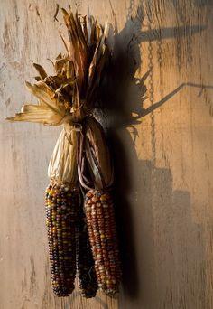 Autumn's Simplicity ~ Maize