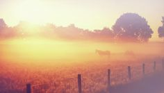 Sun Bathing Horses by Jenny Rainbow. Early foggy morning with thick layer of fog filled with rising sun covered the field where peacefully grazing horses. Rural Holland. Available as framed, acrylic, metal and wood prints and canvas in different sizes. Order and payment online, 30 day money back guaranty. #JennyRainbowFineArtPhotography #Sunrise #ArtForHome #AcrylicPrint #ArtForHome #BuyArtOnline #Horses