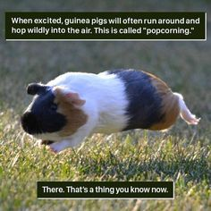 50+ Weird Animal Facts That Will Change The Way You Look At Nature