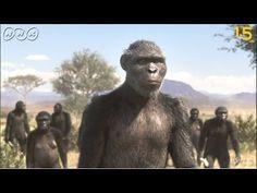 【人類誕生CG】370万年前の人類は虫を食べていた!【NHKスペシャル×NHK1.5ch】 - YouTube Primates, Mammals, Pet Dogs, Dog Cat, Prehistoric, Finland, Discovery, Evolution, Blessed