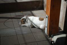 Sunbathing...