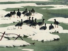 C F Tunnicliffe, Snowy saltings