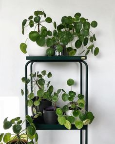 Terrific Totally Free big planting indoor Strategies : Whenever the winter months blahs set in and you're struggling fresh veggies through the summer season back garden, take into consideration escalating . Indoor Garden, Indoor Plants, Boho Dekor, Deco Nature, Living Vintage, Soaking Wet, Plant Aesthetic, Plants Are Friends, Green Rooms