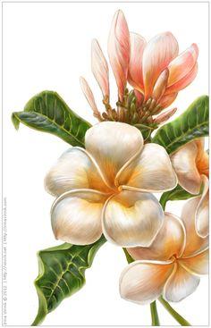 http://irinavinnik.com/1719/1198930/gallery/plants