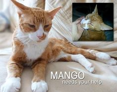 Anjellicle Cats Rescue, Inc. BROOKLYN Sweet MANGO (12 years) NEEDS MEDICAL HELP - DONATIONS. Please click on this link to make a donation and find more details about Mango and this Amazing Treatment. Thank you! http://chipin.anjelliclecats.org/donate/mango-special-cyber-knife-treatment/  https://www.facebook.com/AnjellicleCatsRescueInc/photos/a.200520373306148.49411.200369229987929/964545736903604/?type=1&comment_id=966585253366319