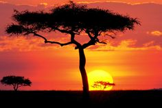 Reserva Nacional Masai Mara - Quênia, África