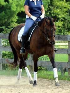 Five Components of the Ultimate Warm Up in Horse Riding