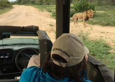 Wild Wings Safari offers unforgettable scheduled Kruger Park Safaris: 4 or - or you can custom your own. Expert, knowledgeable guides, open safari vehicles, overnight in Kruger itself for a real African safari experience. Big Daddy, African Safari, Park, Parks
