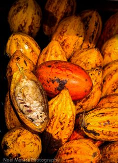 Tropical fruit from Hawaii | Travel Photo DiscoveryTravel Photo Discovery