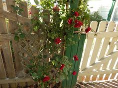 YOU WILL SEE THIS AS YOU EXIT THROUGH THE VEGGIE GARDEN GATE!