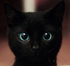 Cat. beautiful eyes <3