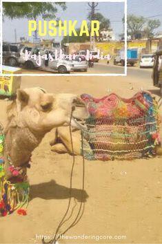 Top things to do in Pushkar, India || Pushkar 1 day itinerary || Pushkar Itinerary || places to visit in Ajmer || Pushkar || Brahma Temple || Pushkr Lake || Pushkar Desert || Desert Safari || Pushkar Fair - Mela || India || Asia || Places to see || Things to do || Travelling || Travel || #thewanderingcore #travel #asia #india #ajmer